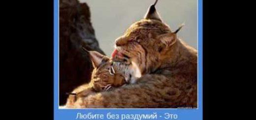 _att_9-PEO2xG134_attachment