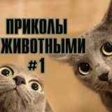 _att_D26fBC18fMU_attachment
