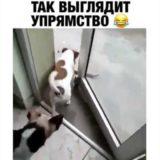 _att_byUPB9rwras_attachment