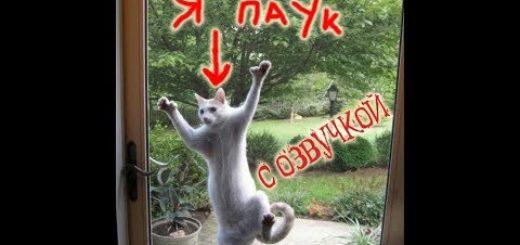 _att_jYGORK_7UO8_attachment