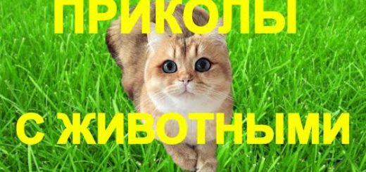 _att_G_St6kKvjrM_attachment